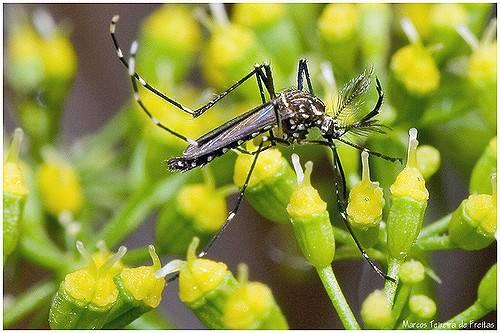 Una zanzara posata su una pianta