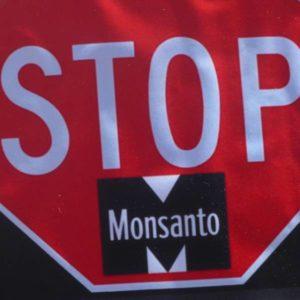 Polonia: protesta contro gli OGM