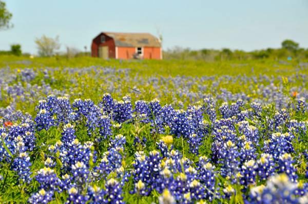 Un paesaggio verde del Texas