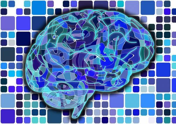 Verso lo sviluppo di un cervello bionico