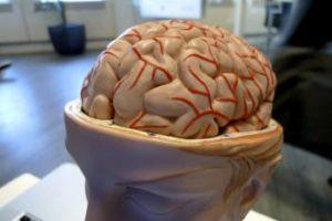 Una protesi cerebrale per salvare la memoria a lungo termine