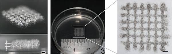 I corpi embrioidi stampati in 3D