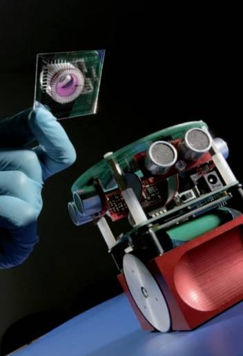 Un robot e un cervello riprodotto in vitro