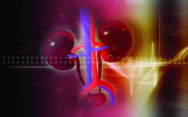 Ricostruzione grafica in 3D dei reni