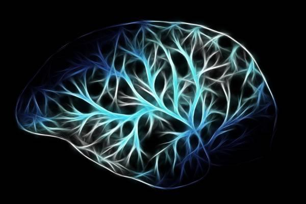 Un cervello digitale